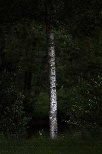 Sentinel of White