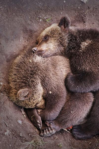 Cuddling Bears
