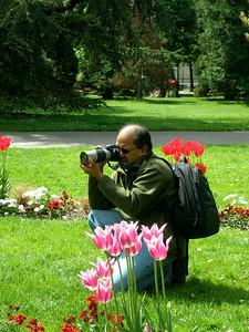Tulips in my bag