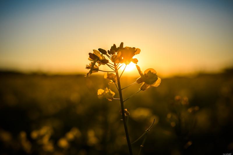 Last sunrays