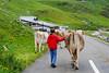 Boy herding Swiss Cows - Klaussen Pass, Switzerland