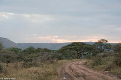Dusk in the Serengeti