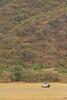 PN Lake Manyara