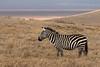 Cebra/Pundamilia/Zebra