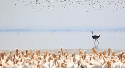 Escena del lago Manyara