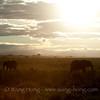 In Serengeti National Park in northern Tanzania. 坦桑尼亚北部塞伦盖蒂国家公园日落
