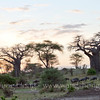 Wildebeests at sunrise in Tarangire National Park, northern Tanzania 坦桑尼亚北部塔拉哥尔国家公园日出时的角马群