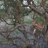 In Tanrangire National Park  坦桑尼亚北部塔拉哥尔国家公园中