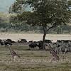 In Arusha National Park, northern Tanzania 坦桑尼亚北部阿鲁沙国家公园内