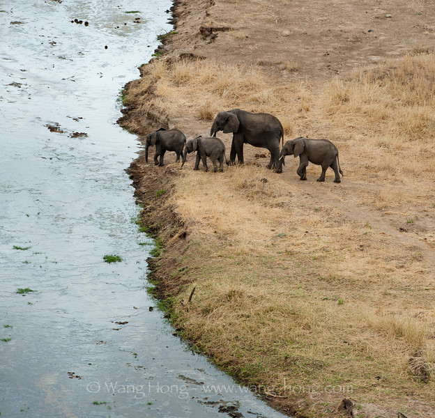 Elephants in Tarangire National Park, northern Tanzania  坦桑尼亚北部塔拉哥尔国家公园中的象群