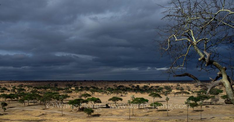 Tarangire National Park.