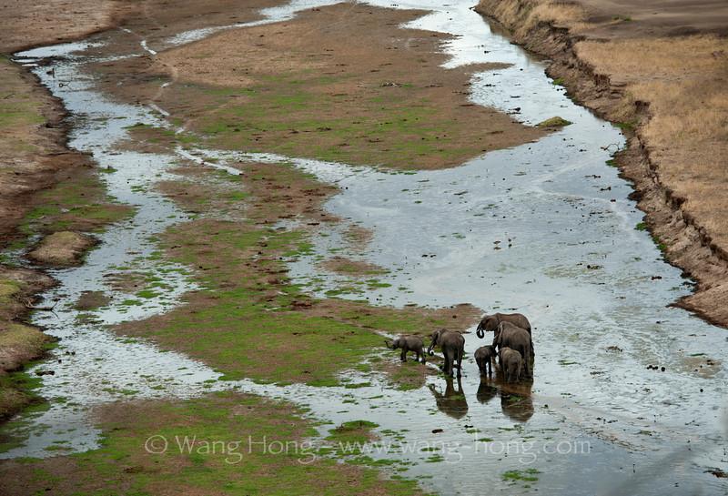 Elephants in Tarangire National Park, northern Tanzania  坦桑尼亚北部塔拉哥尔国家公园中的象群