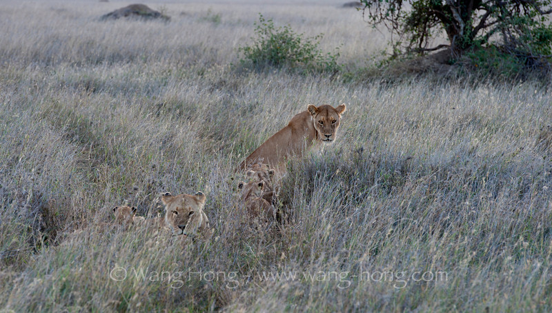 At dusk in Serengeti National Park, northern Tanzania 坦桑尼亚北部塞伦盖蒂国家公园黄昏