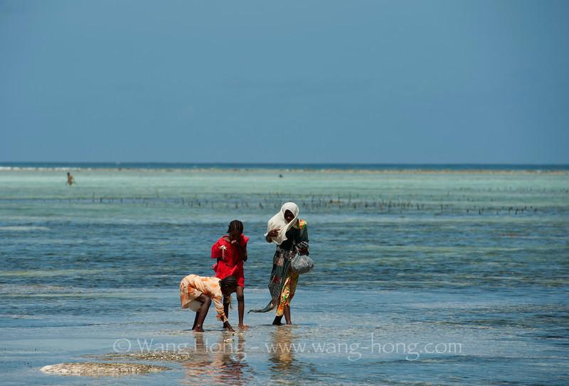 Zanzibar - On Matemwe Beach 坦桑尼亚桑给巴尔岛