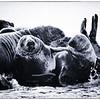 Team Seal