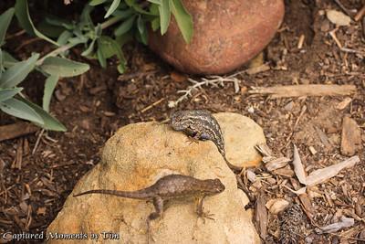 Tecalote Canyon_20090526_035