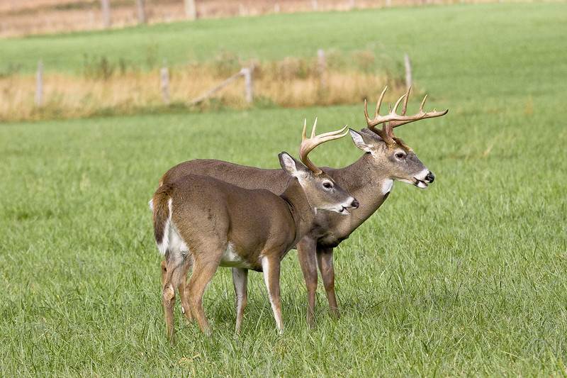 Buck  Sparring 102506_097
