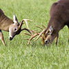 Buck  Sparring 102506_076