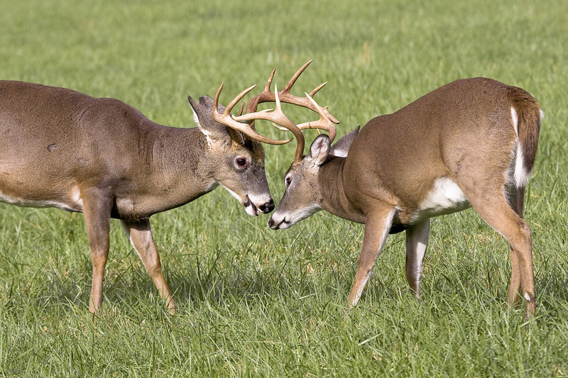 Buck  Sparring 102506_103