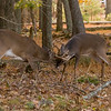 Buck Sparring 102707_0283