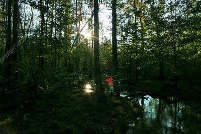 IMG_2719 Dismal Swamp