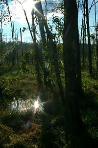 IMG_2654 Dismal Swamp