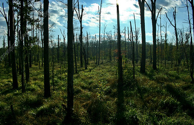 IMG_2645 Dismal Swamp