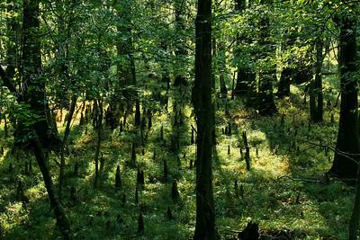 IMG_2639 Dismal Swamp