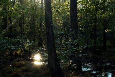 IMG_2722 Dismal Swamp