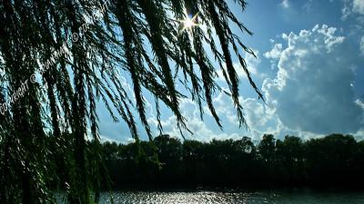 IMG_0879 Sun Shining Through a Willow Tree