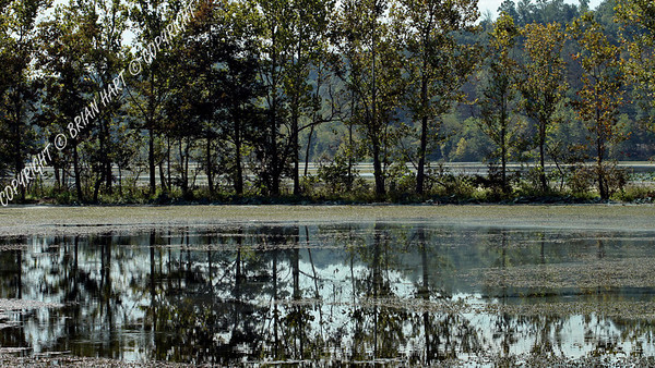 Sep 21, 2007 - Trees reflecting in the murky water - Cross Creeks NWR near Dover, TN.