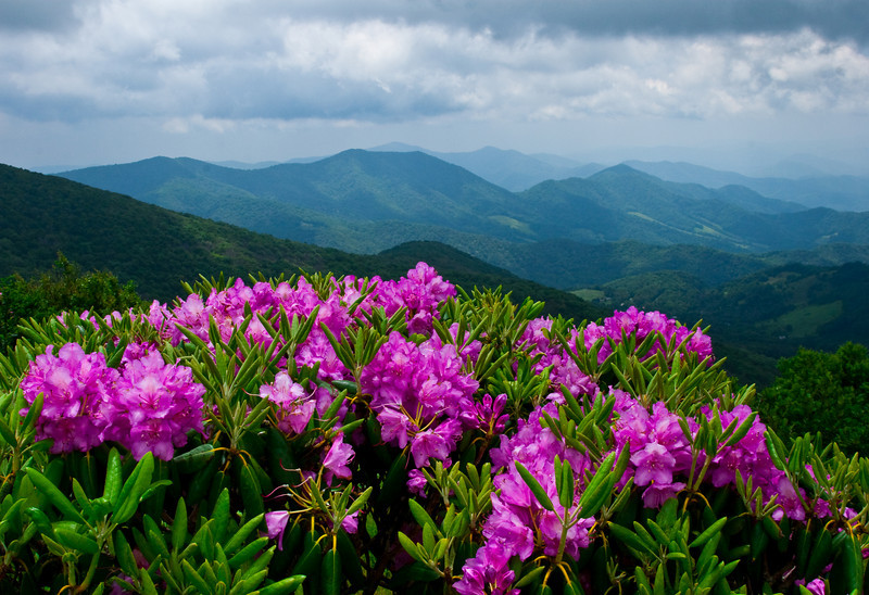 Rhodies With a View