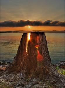 Stump Sunrise HDR