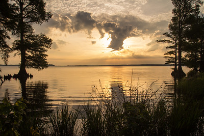 20150523Reelfoot Lake059