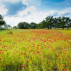 2017_4_15-16 Texas Hill Country-279