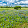 2017_4_15-16 Texas Hill Country-448-2