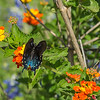 2017_4_15-16 Texas Hill Country-133
