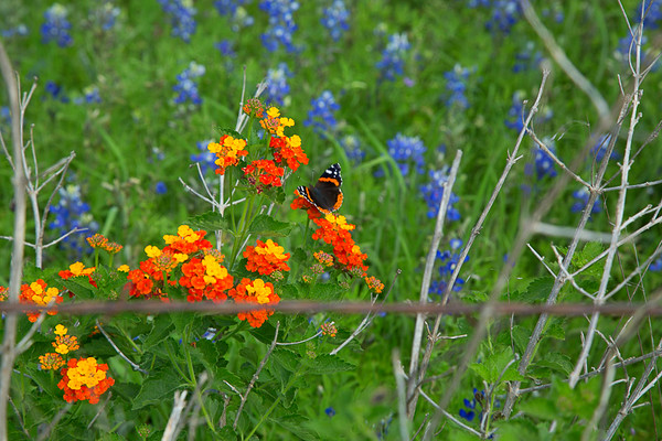 2017_4_15-16 Texas Hill Country-53