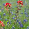 2017_4_15-16 Texas Hill Country-597