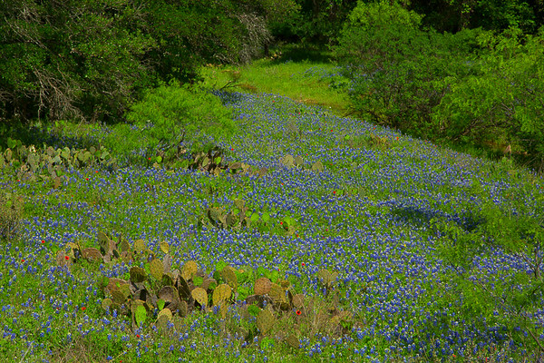 2017_4_15-16 Texas Hill Country-88