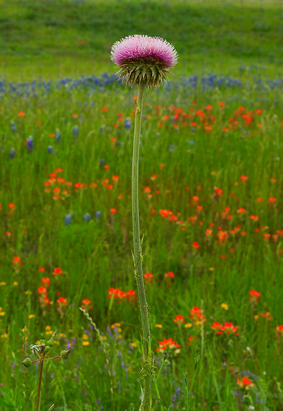2017_4_15-16 Texas Hill Country-407-2