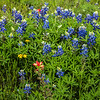 2017_4_15-16 Texas Hill Country-509-2