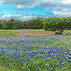 2017_4_15-16 Texas Hill Country-371-2