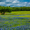 2017_4_15-16 Texas Hill Country-465-2