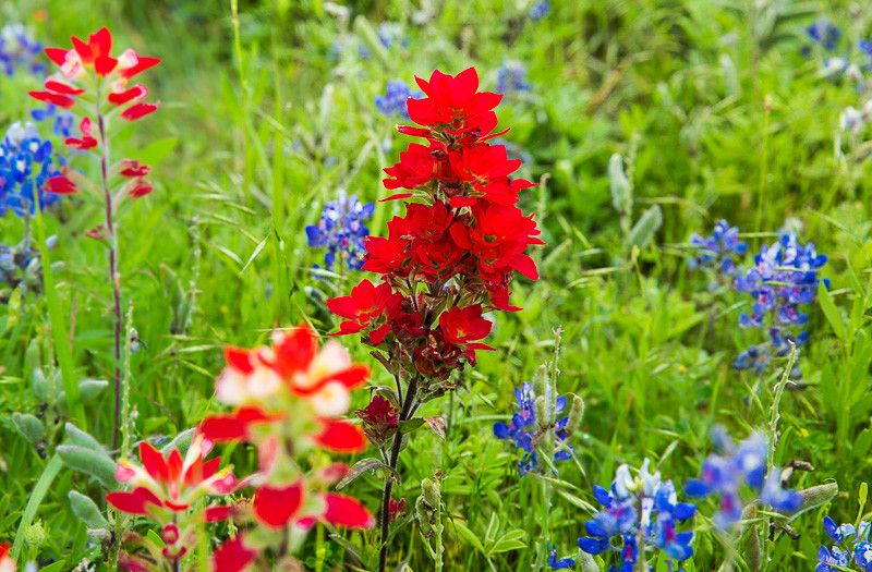 2017_4_15-16 Texas Hill Country-76-2