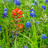2017_4_15-16 Texas Hill Country-594