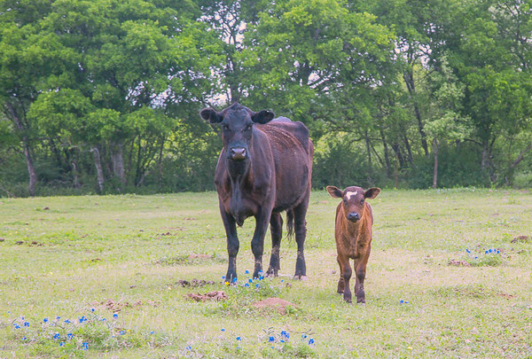 2017_4_15-16 Texas Hill Country-538