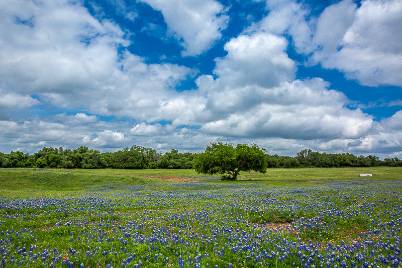 2017_4_15-16 Texas Hill Country-449-2