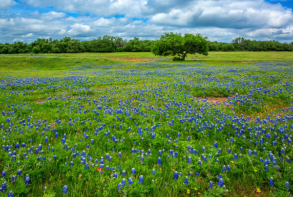 2017_4_15-16 Texas Hill Country-443-2