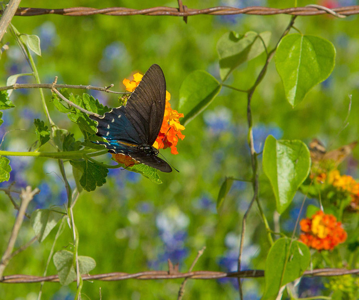 2017_4_15-16 Texas Hill Country-142